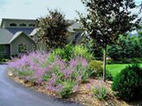 Front yard designs can be colorful.