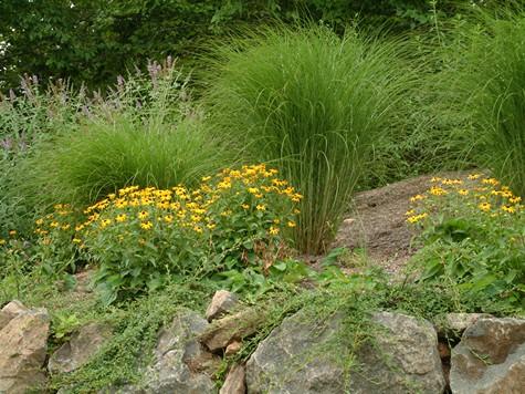 Discover great ornamental grasses for Ornamental grass garden ideas