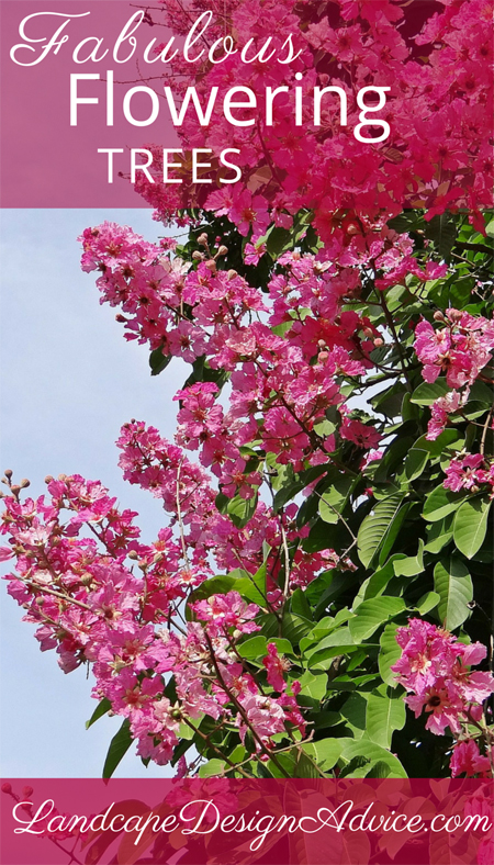 Crape myrtle pink flowering tree.