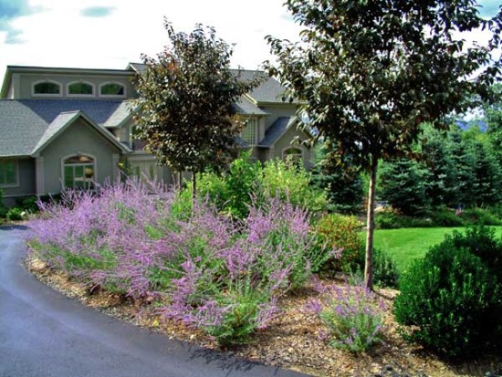 Create an attractive driveway entry with plants.