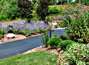 Front yard color with perennials at driveway.