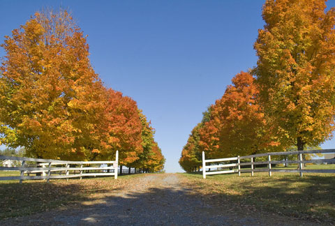 best trees for driveways