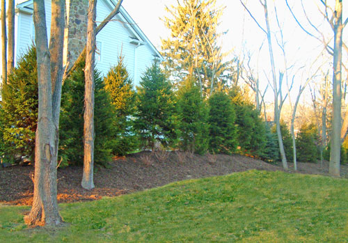 Trees on a berm for screening.