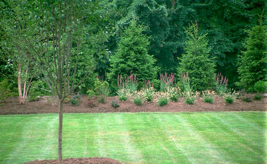 Huge landscape idea best landscaping for privacy for Backyard privacy landscaping trees