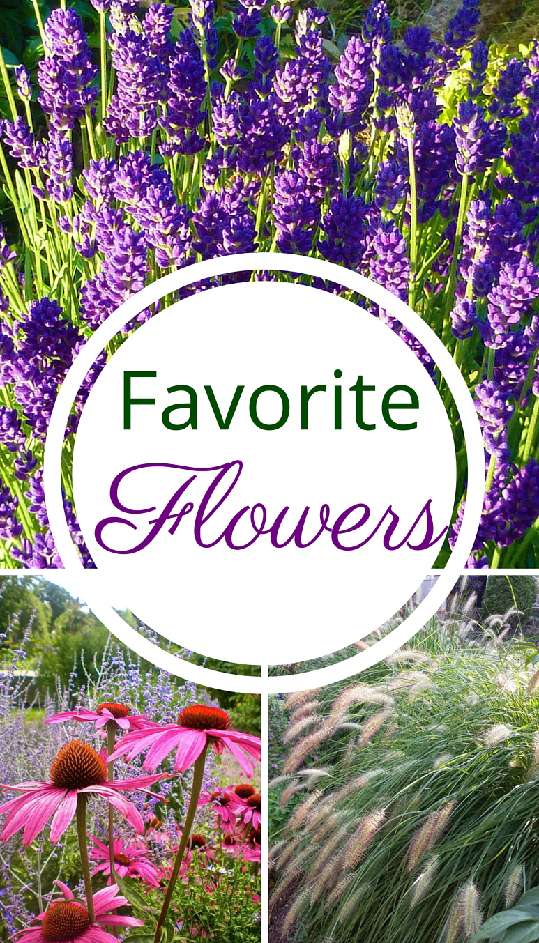 Favorite & Easy Flowers