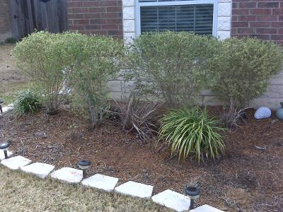 Front Plantings - Need Help With Landscape Design