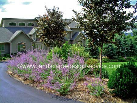 Allee of trees along driveway with perennials.
