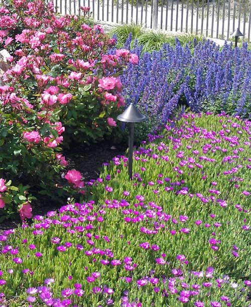 Charming Either Way, Here You Will Find How To Get Those Dazzling Colors Into Your  Landscape.
