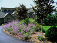 driveway entry plantings
