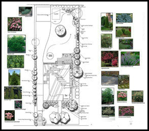 Landscape design with plant photos