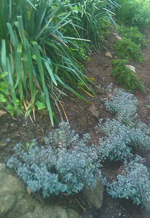 Xeriscape Plants Drought Tolerant