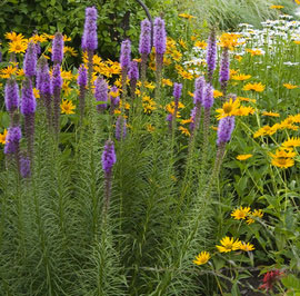 Perennial Flowers For A Stunning Design