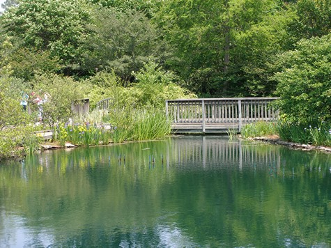 Large natural pond as a beautiful water feature.