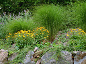 ornamental grass that will