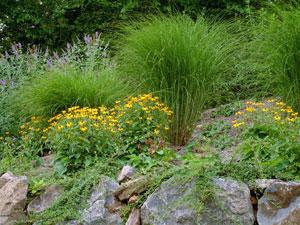 ornamental grass that will