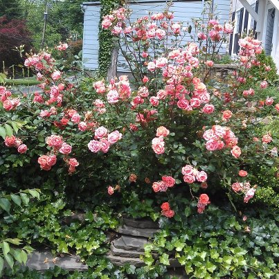 Creating Front Yard Color