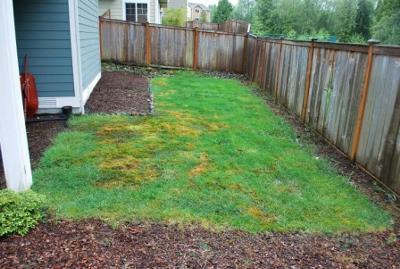low maintenance backyard design