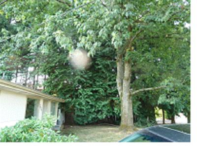 trees on south side of house