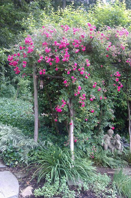 Simple Rose Garden: Easy To Grow Roses