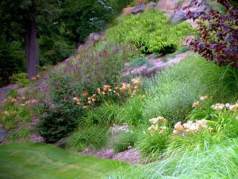 Landscaping steep slopes hillside landscapes for Hillside landscaping plants