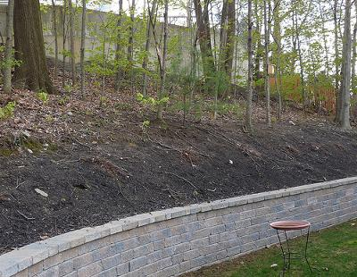 Backyard slope to woods