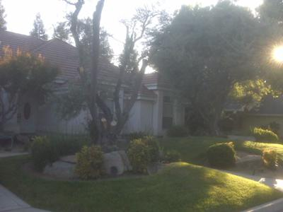 Download when i planted the front lawn i also planted more olive trees