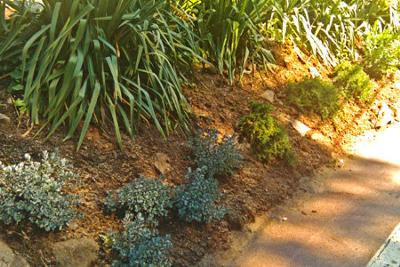 Xeriscape Plants on a Slope