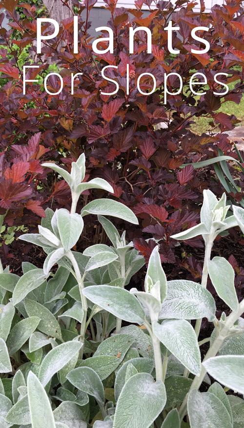 plants for slopes