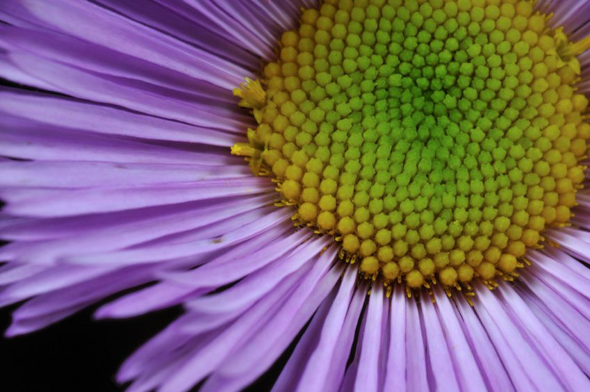 Asters are showy fall perennials.