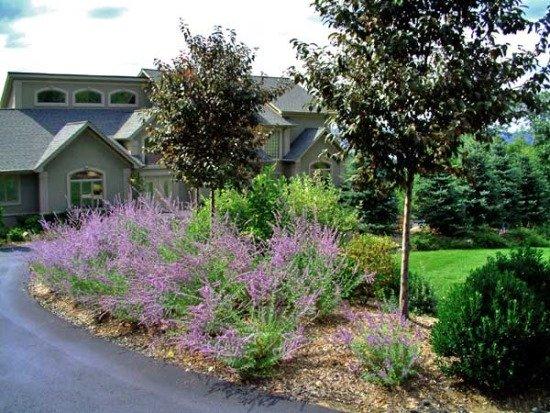front yard design with perennials.