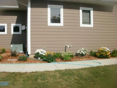 plants for house foundation
