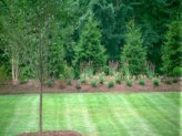 Privacy plantings using evergreen trees.
