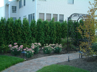 Plants for privacy instead of fence
