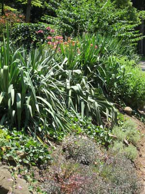 Steep slope landscaping with drought tolerant plants.