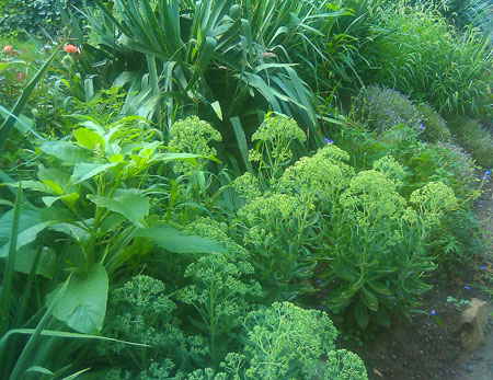 Use drought tolerant plants for a slope.